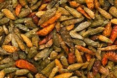 Bhut Jolokia ou pimentão do fantasma (frutescens do capsicum de Ã- do chinense do capsicum) Fotos de Stock Royalty Free