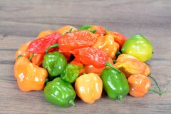 Bhut jolokia pepper Stock Images