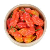 Bhut jolokia pepper Royalty Free Stock Image