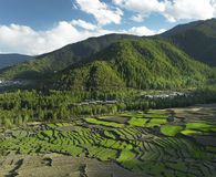bhutan fields kungarikepaddy Arkivbilder
