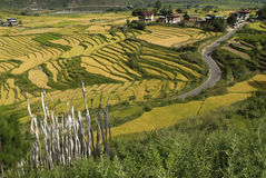 Bhutan, Punakha,. Bhutan, village and rice cultivation in Punakha Royalty Free Stock Images