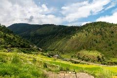 Bhutan Rice Fields, Paro Valley Sep 2015 Royalty Free Stock Image
