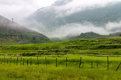 Bhutan Rice Fields, Paro Valley Sep 2015 Stock Photos