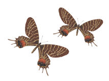 Bhutan-Ruhm-Schmetterlingspaare Stockfoto