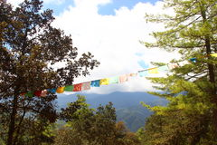 Bhutan. The worship flags hoisted between two trees mist a jungle Stock Photography