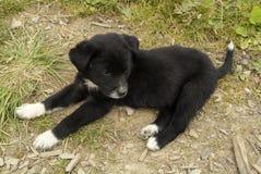 Bhutan, zoologia zdjęcia stock