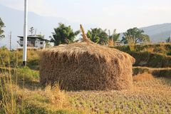 Bhutanese θυμωνιά χόρτου, Punakha, Μπουτάν Στοκ εικόνα με δικαίωμα ελεύθερης χρήσης