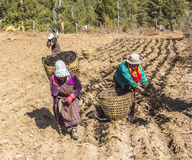 Bhutanese women on the field Royalty Free Stock Photos