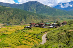Bhutanesisk by och terrasserat fält på Punakha, Bhutan Arkivbilder