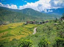Bhutanesisk by och terrasserat fält på Punakha, Bhutan Royaltyfria Foton