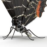 Bhutanitis Lidderdalii or Bhutan Glory Butterfly Swallowtail Isolated on White Background 3D Illustration. Bhutanitis LidderdaBhutanitis Lidderdalii or Bhutan stock images
