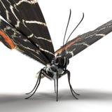 Bhutanitis Lidderdalii or Bhutan Glory Butterfly Swallowtail Isolated on White Background 3D Illustration vector illustration