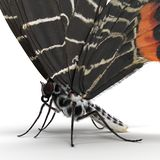 Bhutanitis Lidderdalii ou But?o Glory Butterfly Swallowtail Isolated na ilustra??o branca do fundo 3D foto de stock