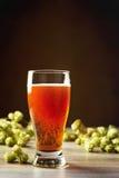 Bière avec des houblon Photos libres de droits