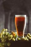 Bière et houblon sur le baril Photos stock