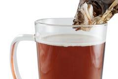 Bière et poissons Photo stock