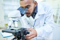 Biólogo considerável moderno que ajusta o microscópio à imagem do zumbido fotografia de stock royalty free