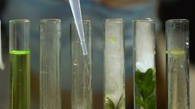Biólogo del laboratorio que añade el líquido en el tubo de ensayo con la muestra de la planta, experimento del gmo almacen de video