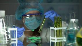 Biólogo que compara el polvo verde con la extracción en tubo de ensayo, investigación de la planta almacen de video