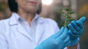 Biólogo que investiga una planta almacen de video