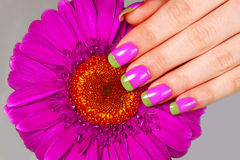 Bi color manicure. Beautiful woman's hand with french bi color manicure on gerbera flower royalty free stock images