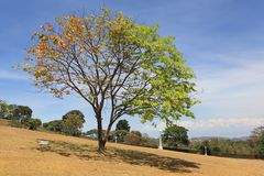 Bi-color tree on serene cemetery Royalty Free Stock Photography