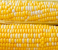 Bi-colors corn  background. Royalty Free Stock Photography