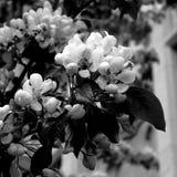 Bi i blomma royaltyfri fotografi