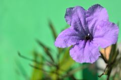 Bi i blomman Arkivbilder