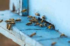 Bi och bikupa Arkivfoton