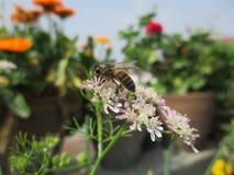 Bi och blomma royaltyfria bilder