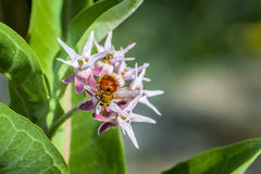 Bi och blomma Royaltyfri Bild