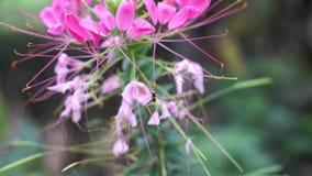 Bi och blomma stock video