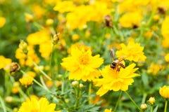 Bi och blommor Arkivbild