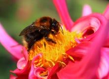 Bi och blommor Royaltyfria Bilder