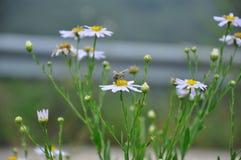 Bi och blommor Arkivfoton