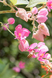 Bi och blommor arkivfoto