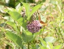 Bi och fjäril på blomman Arkivfoto