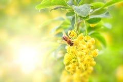 Bi och gulingblomma Royaltyfri Bild