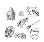 Bi och honung Fotografering för Bildbyråer