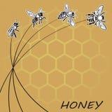 Bi och honung Arkivfoto