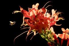 Bi och myror med den röda blomman arkivfoton