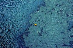 Bi på asfalten Arkivfoton