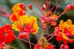 Bi på blomman Arkivbilder