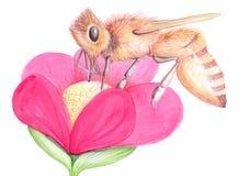 Bi på blomman Arkivbild