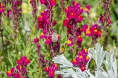Bi på blomman Royaltyfri Bild