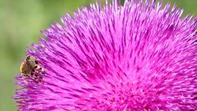 Bi på blommanaturbakgrund lager videofilmer