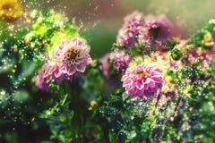 Bi på blommor Royaltyfri Foto