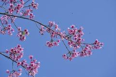 Bi på rosa färgblomma Arkivbild