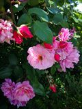 Bi p? blomma royaltyfri foto